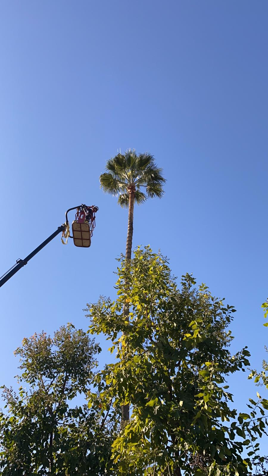 אלעד גיזום עצים